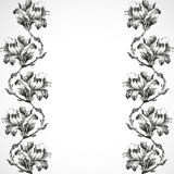 Hand-drawn vertical border flowers of lily vintage  background  Stock Photos