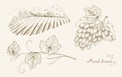 Hand drawn vine set Royalty Free Stock Images