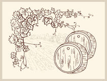 Hand drawn vineyard. Stock Images