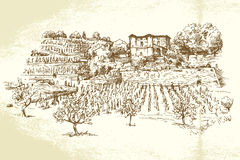 Hand drawn vineyard. Hand drawn illustration of vineyard Stock Photography
