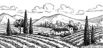 Hand drawn vineyard landscape. Royalty Free Stock Image