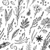 Hand drawn vintage background - herbs and spices. Vector seamles Stock Photography