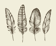 Hand drawn vintage bird feathers. Sketch writing feather. Vector illustration Stock Photo