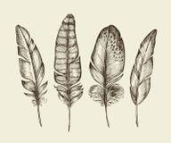Hand drawn vintage bird feathers. Sketch writing feather. Vector illustration. Hand-drawn vintage bird feathers. Sketch writing feather. Vector illustration Stock Photo