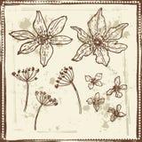 Hand drawn vintage botanical sketches set Stock Photos