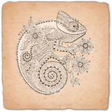Hand drawn vintage card with a chameleon and decorative patterns. Royalty Free Stock Photography