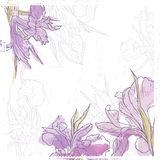 Hand drawn vintage  card with tender watercolor iris  flowers Royalty Free Stock Images