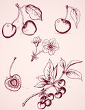 Hand drawn vintage cherry Royalty Free Stock Image