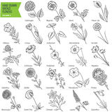 Hand drawn vintage flowers set. Volume 2 Royalty Free Stock Photography