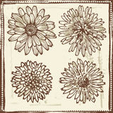 Hand drawn   vintage flowers sketch Stock Images
