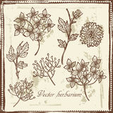 Hand drawn   vintage garden flowers and berries sketch Royalty Free Stock Photo