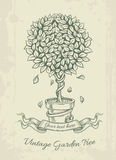 Hand drawn vintage garden tree with falling leaves Stock Images