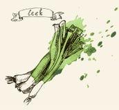 Hand drawn vintage illustration of leek Stock Photo