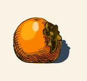 Hand drawn vintage illustration of persimmon Stock Photo