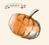 Hand drawn vintage illustration of pumpkin Stock Photography