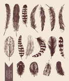 Hand drawn vintage set with feathers. Vector. Hand drawn vintage set with different feathers. Vector Royalty Free Stock Image