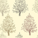 Hand drawn  vintage spruce trees  seamless pattern. All objects are conveniently grouped  and are easily editable Royalty Free Stock Images