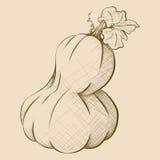 Hand-Drawn Vintage Style Big Oblonged Pumpkin Stock Photography