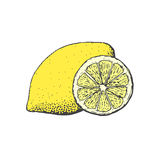 Hand drawn vintage style lemon and a segment of it Royalty Free Stock Images