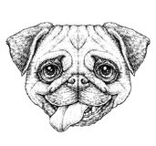 Hand drawn vintage style sketch of cute funny Pug Dog. Vector Illustration Stock Photo
