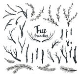 Hand drawn vintage tree branches . Royalty Free Stock Image