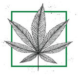 Hand drawn vintage vector illustration - Medical cannabis. Stock Image