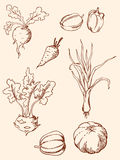 Hand drawn vintage vegetables Royalty Free Stock Images