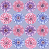 Hand-drawn vintage zinnia pattern. Vintage seamless pattern with zinnia flowers Royalty Free Stock Image