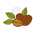 Hand drawn walnuts Stock Photography