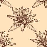 Hand drawn water lilies seamless on a background. Royalty Free Stock Photos