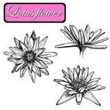 Hand drawn water lilies set on a background. Royalty Free Stock Photo