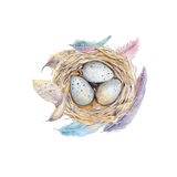 Hand drawn watercolor art bird nest with eggs , easter design. Royalty Free Stock Image
