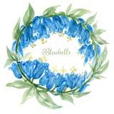 Hand drawn watercolor bluebell flower illustration Painted bellflower botanical herbs isolated vector illustration