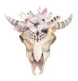 Hand drawn  Watercolor bohemian cow skull.  Western mammals. Royalty Free Stock Image