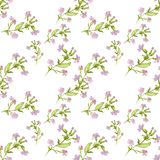 Hand drawn watercolor botanical seamless pattern of field pink flowers with leaves on white background royalty free illustration