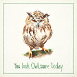 Hand-drawn watercolor card with funny angry owl Stock Images