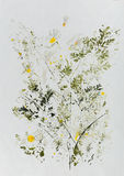Hand drawn watercolor chamomile flowers. Hand painted watercolor stylized image chamomile flowers in impressionism technique Stock Images