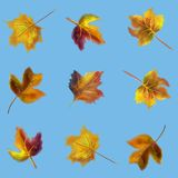 Hand drawn watercolor colorful autumn seamless pattern stock image