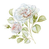 Hand drawn watercolor delicate white roses bouquet Stock Photo