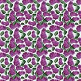 Lilac branch watercolor seamless pattern Royalty Free Stock Photos