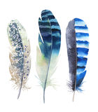 Hand drawn watercolor feather set. Boho style. illustration isol Royalty Free Stock Photos