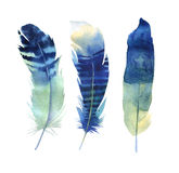 Hand drawn watercolor feather set. Boho style. illustration isol Stock Images