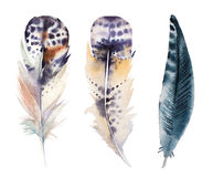Hand drawn watercolor feather set, raster vector illustration