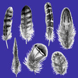 Hand Drawn Watercolor Feathers. Royalty Free Stock Photos