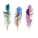 Hand drawn watercolor feathers vector illustration