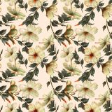 Hand-drawn  watercolor floral seamless pattern with the tender white hibiscus flowers. On the white background in vintage style. Natural tropical and vibrant Stock Photography