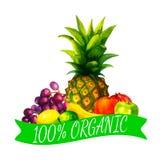 Hand drawn watercolor fresh organic fruits illustration set on white background Stock Photo