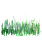 Hand drawn watercolor grass. Royalty Free Stock Photo