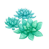 Hand drawn watercolor group of three succulents Stock Images