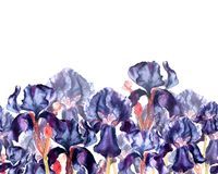 Hand drawn watercolor illustration of dark blue iris flowers. Seamless border in a watercolor style. stock images